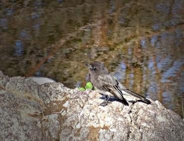 birdonrock