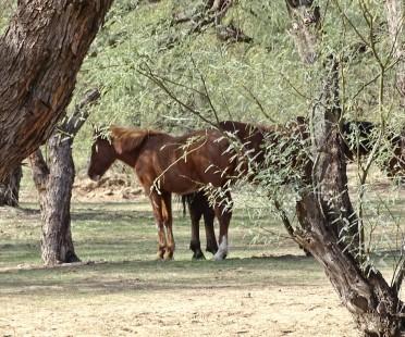 horsesinwild