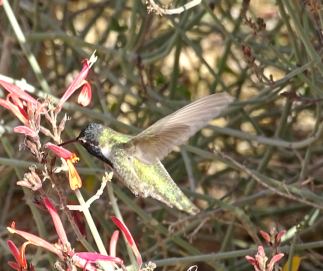 greenhummer