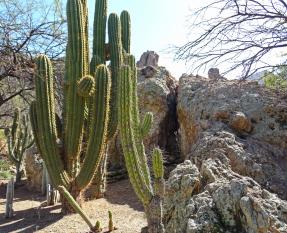 saguarogarden