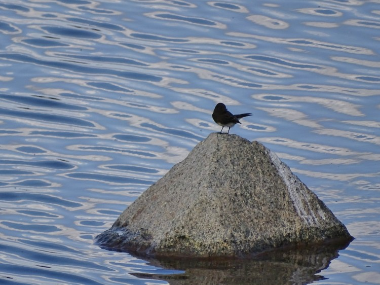 bluewaterrock