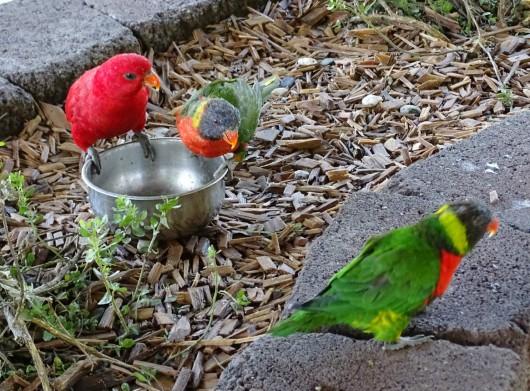 Parrotplayground