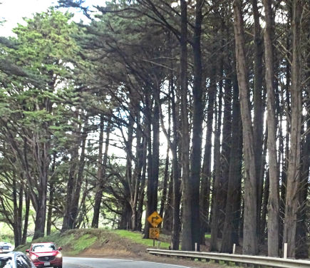 TreesHwy1CA.png