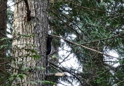 blacksquirrel.jpg