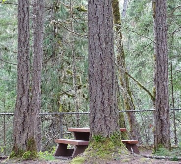 picnicintrees