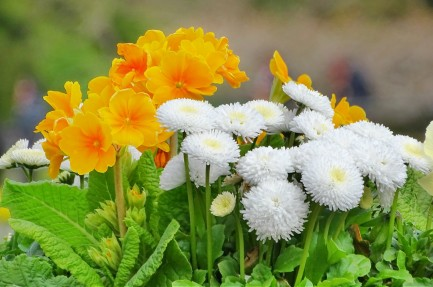 sweetflowers