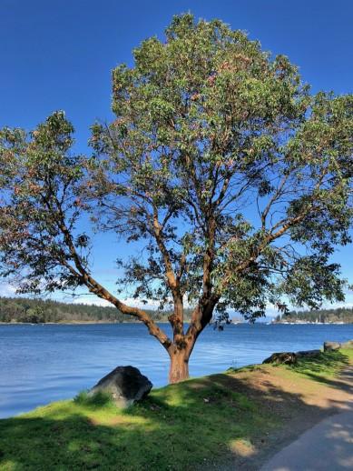 Treeatharbour.jpg