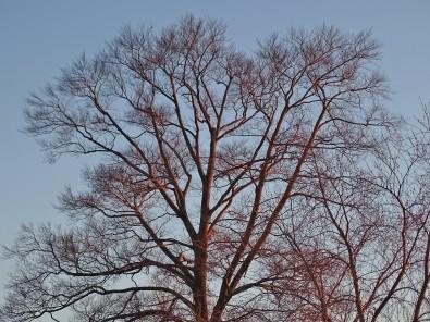 wintertreetop