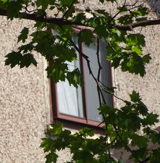 windownbranches.jpg