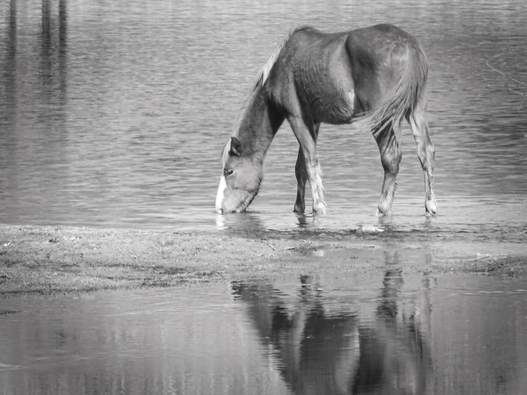 mirroredhorse bw
