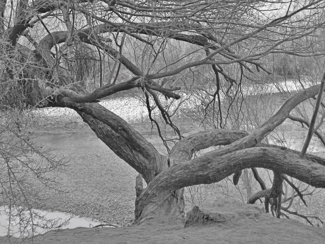 Coon'stree bw
