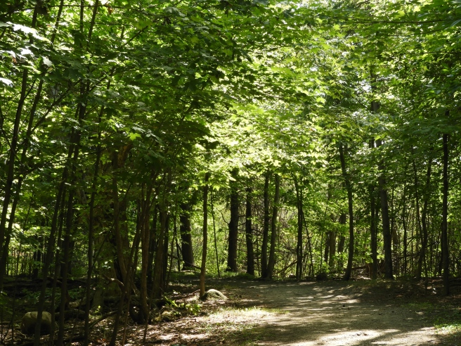 Jack Pine Trail 3