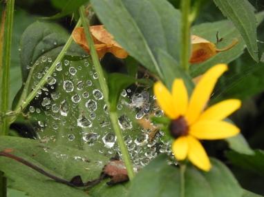 rain crystals