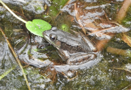 small frog 2