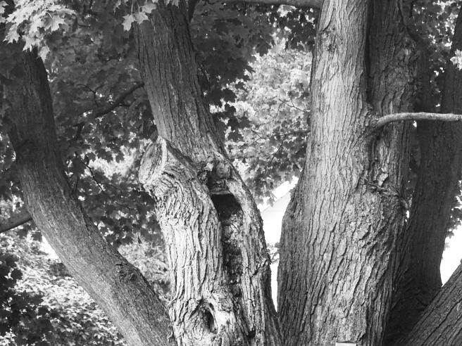 Tree trunk bw