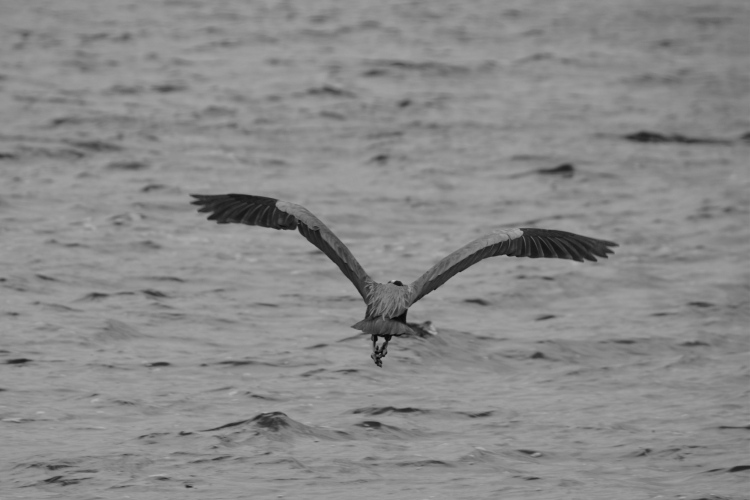 heron lift bw
