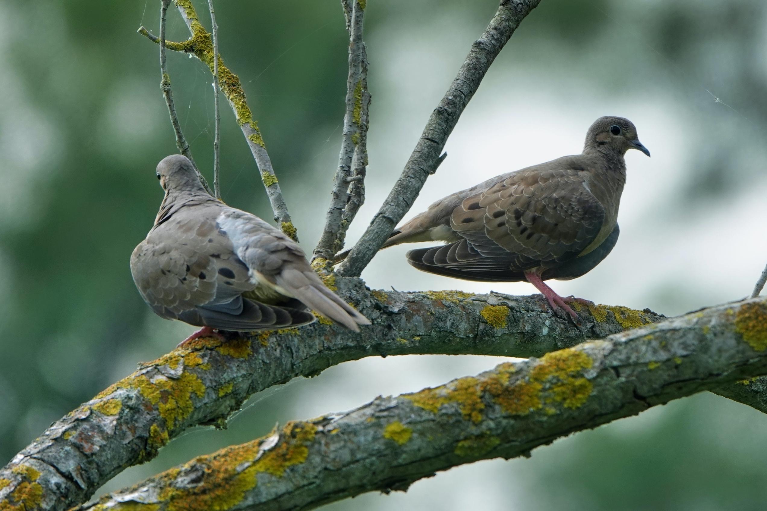 Birds and Bokeh